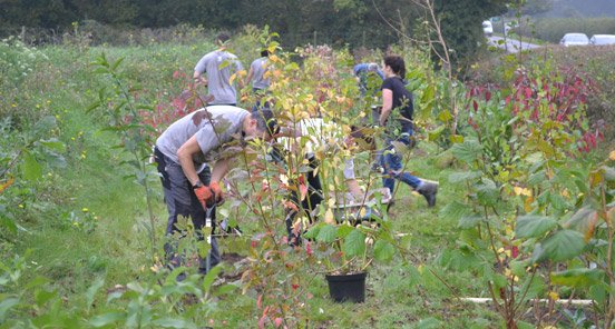 Shipley Planting Project